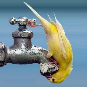 ThirstyBird