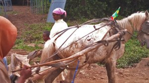 AddisGari23