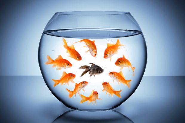 goldfish-staring-at-black-fish-in-bowl-racism